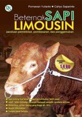 Berternak Sapi Limousin